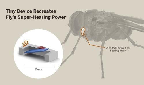 模仿苍蝇听觉系统的智能免电池助听器
