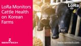 让每头牛奶更健康—LoRa技术监测牲畜健康情况