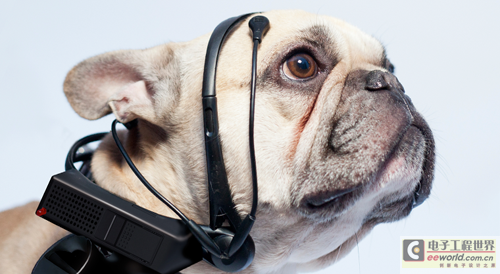 想知道小狗在想什么?脑电头戴设备帮忙翻译
