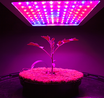 揭秘植物栽培技术 贸泽推出全新园艺应用子网站