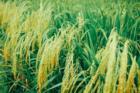 曙光中标农业农村部!以数据驱动农业农村发展
